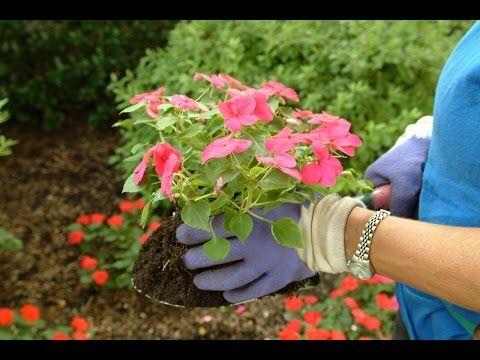 Cuándo podemos trasplantar las plantas recién compradas - Hogarmania