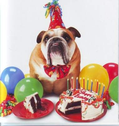 Birthday party dog.. hey is that doggy cake of people cake