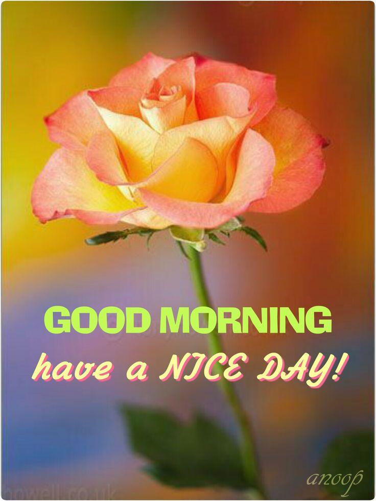 Good Morning Love Flower Image : Best good morning thursday images on pinterest all