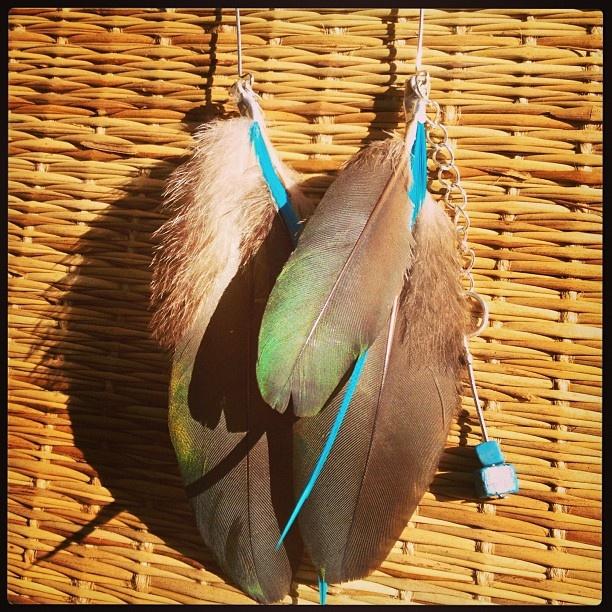 Kereru Feather