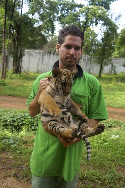 """7 reasons to think twice before visiting Thailand's """"Tiger Temple"""""""