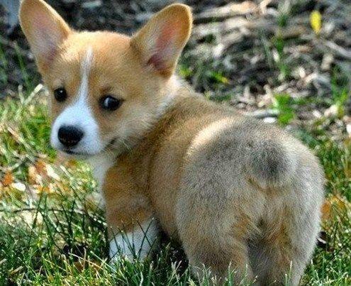I Need A Dog