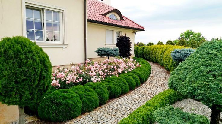 Róże w ogrodzie. Ogrody Kielce.