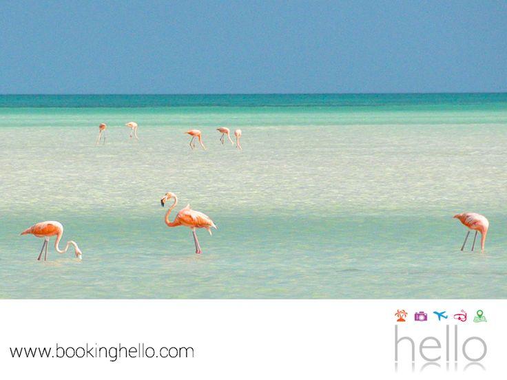 VIAJES EN PAREJA. Si elegiste pasar tus vacaciones en el Caribe mexicano, en Booking Hello te recomendamos planear un recorrido por las exóticas islas de este lugar. Holbox es una opción en donde el romanticismo se combina con la diversión. Tu pareja y tú podrán disfrutar de las atracciones de temporada como el avistamiento de flamencos y pelícanos e incluso, nadar con tiburones ballena. #BeHello