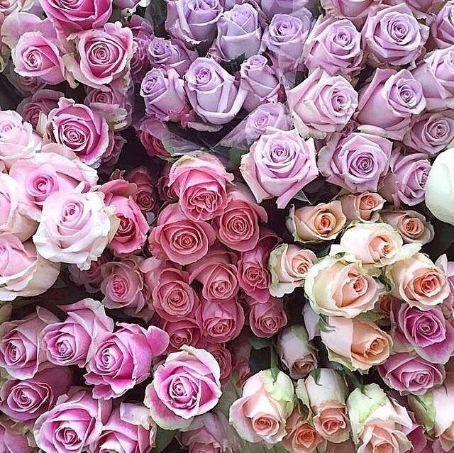 79 best Flowers images on Pinterest | Beautiful flowers, Plants ...