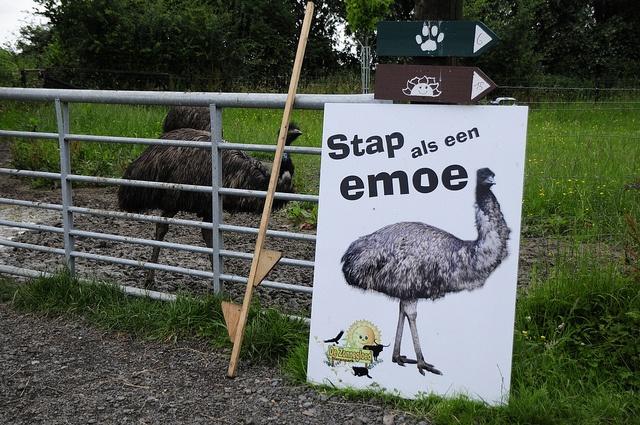 Stap als een emoe...    www.ideekids.be/dierenverzorgerskamp