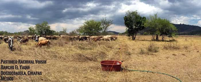 Voisin-style Rational Grazing - Interview with Daniel Suárez, rancher and grazing educator.