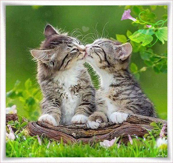 россия картинка котик целует кошечку стуки других