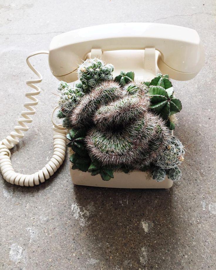 Insta Find | Botanical Project         |          Poppytalk