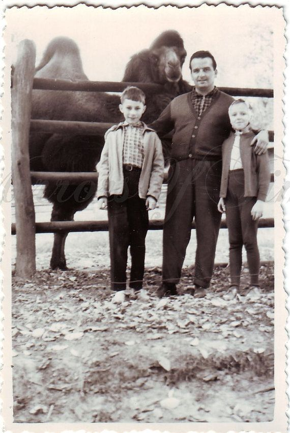 Vintage Photo  Father with sons  Camel photo  ZOO photo