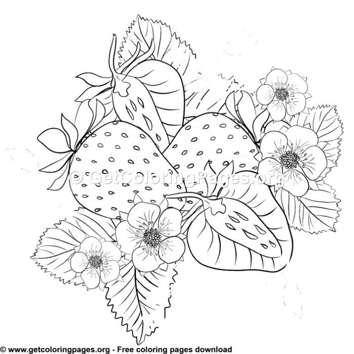 Strawberry Coloring Sheet Fruit Coloring Pages Coloring Pages Strawberry Drawing