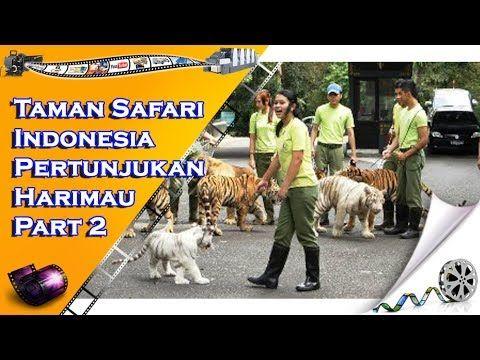 Taman Safari Indonesia Pertunjukan Harimau - Part 2