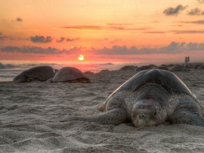 Cabo San Lucas – Sea Turtle Season in Los Cabos