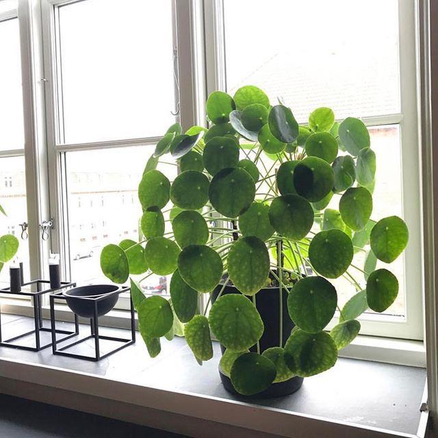 432 besten flat bilder auf pinterest zimmerpflanzen basteln und g rtnern. Black Bedroom Furniture Sets. Home Design Ideas