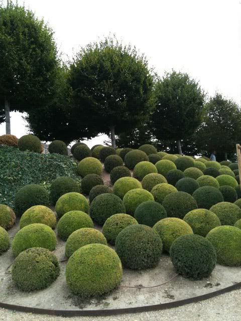 Incredible landscaping effect with boxwood topiary spheres, especially as the circular form repeats in the trees.
