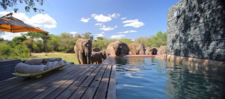 #Phinda Homestead #Elephants - Phinda Private Game Reserve, from the &Beyond portfolio of properties, is a 23,000 hectare private #gamereserve in South Africa's KwaZulu-Natal region. It lies between the Mkuze Game Reserve and the St. Lucia Wetland Park. Formed in 1990, the reserve's diversity of habitat with seven distinct ecosystems is key to its richness in supporting #wildlife. In fact, Phinda Reserve is often referred to as 'Seven Worlds of Wonder'. #SouthAfrica