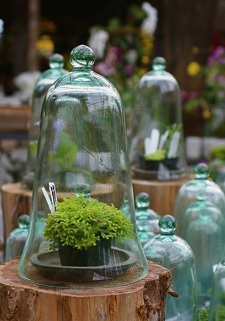 love cloches of any kind/material - maybe too spendy for the starts in the garden, also probably get stolen but maybe for a few special guys in the back yard?