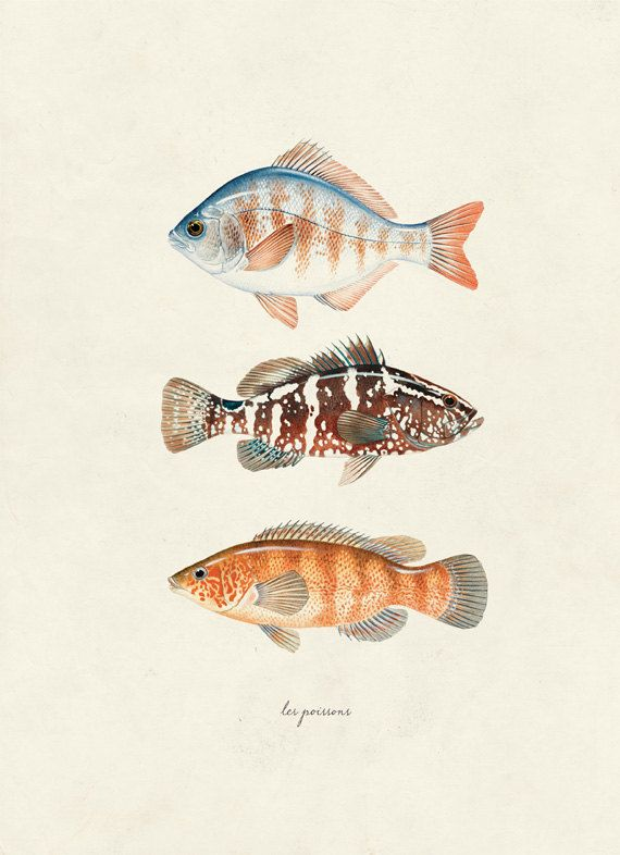 Vintage Fish Les Poissons Print 8x10 P30 by OrangeTail on Etsy