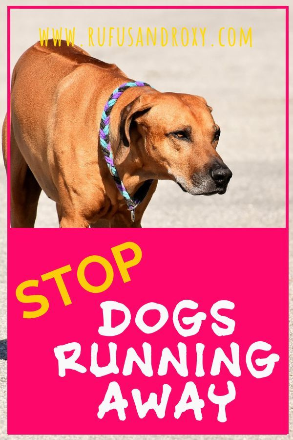 How To Stop Your Dog Running Away And Why They Do It Dog Runs