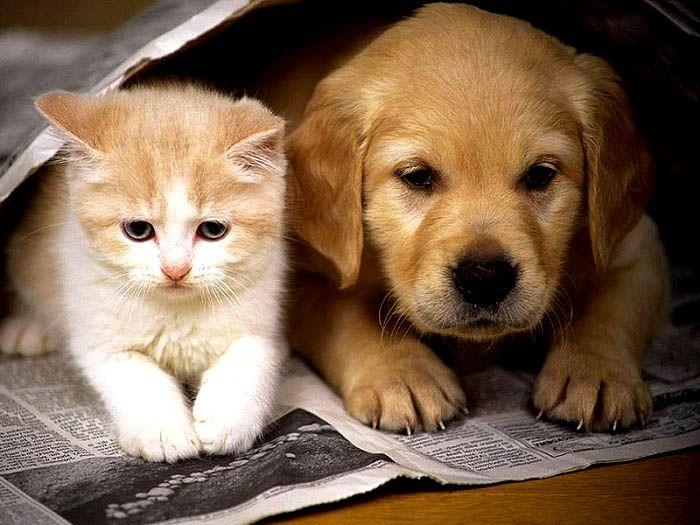Comment Aider Les Chiens Et Les Chats A S Entendre Cat Lovers Dog Cat Animals