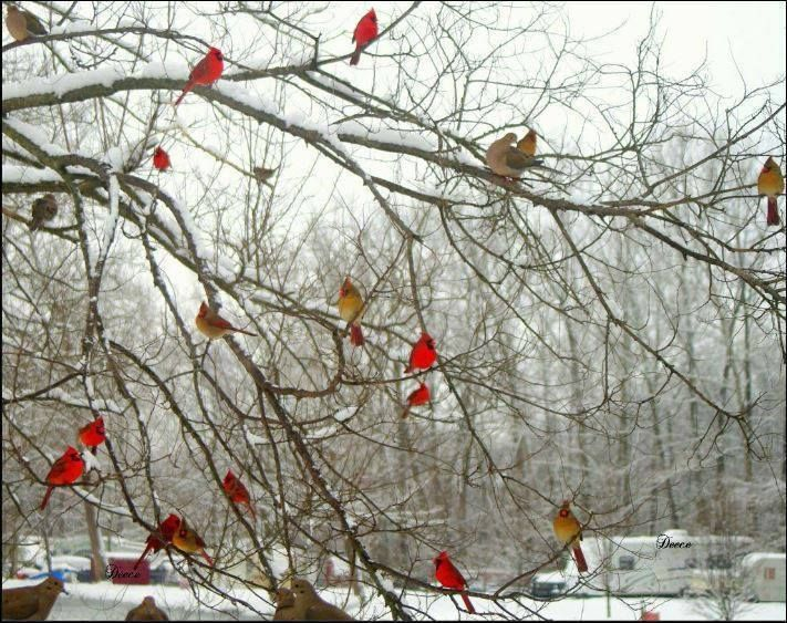 A cardinal is a representative of a loved one who has passed. When you see one, it means they are visiting you. They usually show up when you most need them or miss them. They also make an appearance during times of celebration as well as despair to let you know they will always be with you. Look for them, they'll appear.