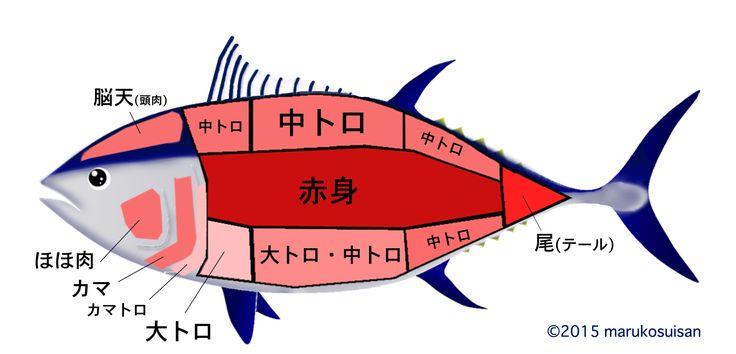 マルコ水産株式会社が語るまぐろの小咄・まぐろの部位、教えます。
