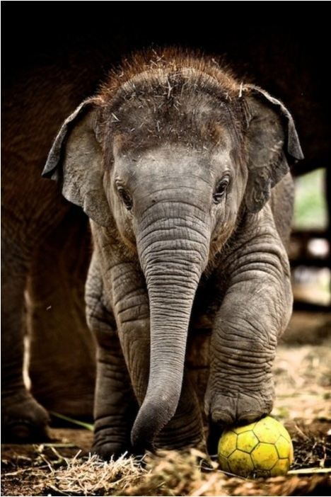 Adorable little Elephant.  I can officially say I <3 Elephants more than ever, anyone who can carry a baby for 2 years deserves it!
