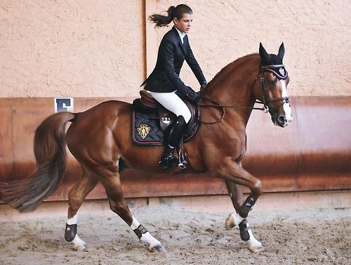 EquestrianHorseback Riding, Beautiful Hors, Charlotte Casiraghi, Riding Boots, Horses Riding, Equestrian Style, Things I Want In Life Horses, Dreams Hors, Riding Horses