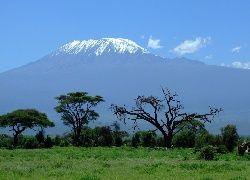 Kenia, Góra, Kilimandżaro, Sawanna, Drzewa