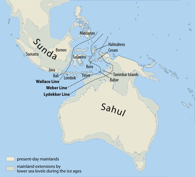 The map shows the probable extent of land and water at the time of the last glacial maximum, 20,000 yrs BP and when the sea level was probably more than 110m lower than today. (Map of early human migrations according to mitochondrial population genetics (numbers are millennia before present).