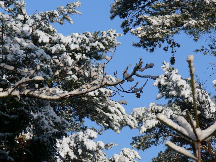 sneeuw en blauwe luchten