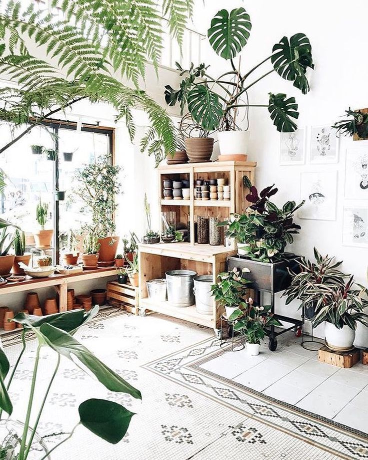 Tree Inside The House Interior Climate Controlled: Best 25+ Plant Decor Ideas On Pinterest