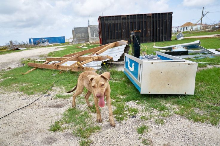 This was the scene, or something very nearly like it, last week when World Animal Protection's disaster response team arrived in Barbuda to help animals and communities in the aftermath of Hurrican…