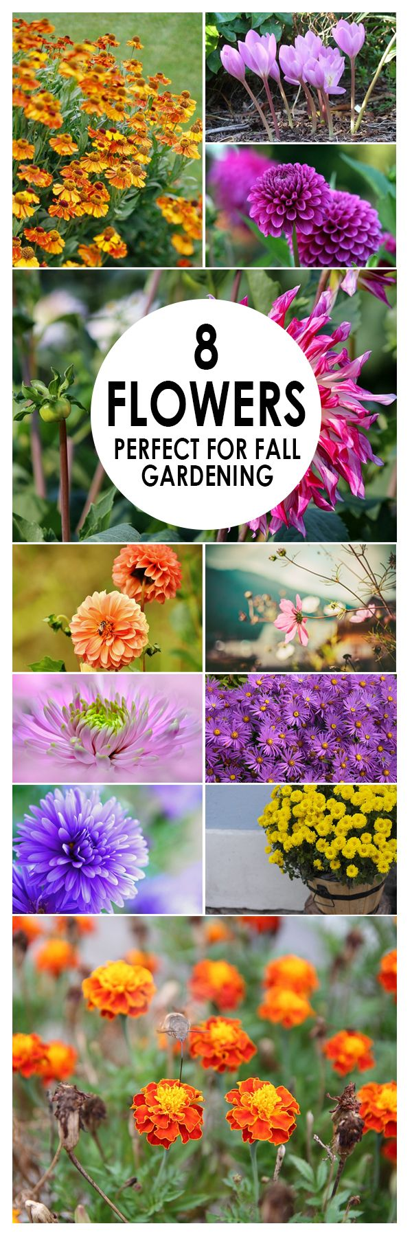 Best 25 fall flower gardens ideas only on pinterest bulb 8 flowers for fall gardens dhlflorist Image collections
