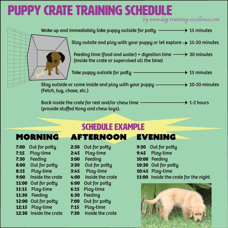 puppy crate training schedule