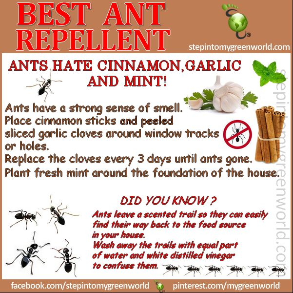 ANT REPELLENTS!  Spring is almost here and it brings ANTS with it.  FOR ALL THE INFORMATION:  http://www.stepintomygreenworld.com/greenliving/around-the-home/best-ant-repellents/  ✒ Share | Like | Re-pin | Comment