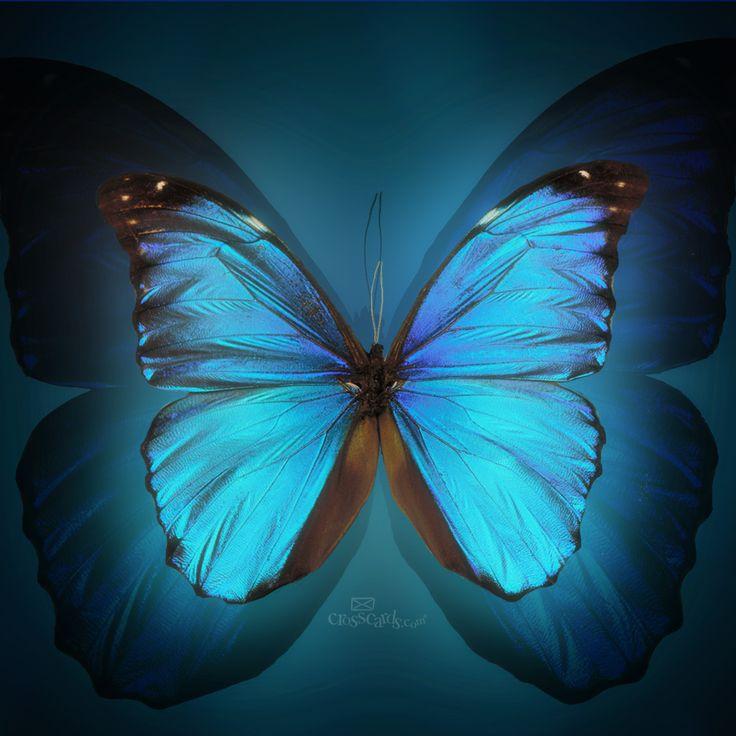 ... Butterfly Wallpaper Download