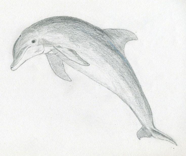 Easy Pencil Drawings: Best 25+ Easy Pencil Drawings Ideas On Pinterest