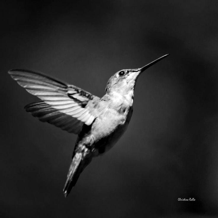 Black And White Hummingbird Print Bird Art, Black And ...