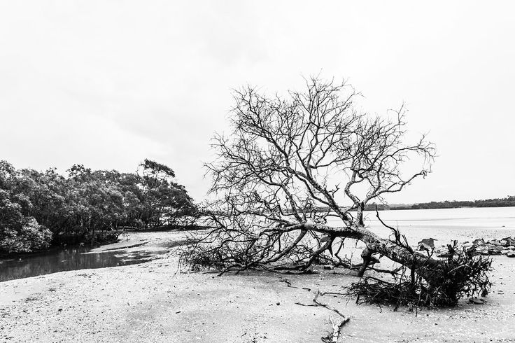 Fallen Tree - Brighton, QLD, Australia - Monochrome - Zac Harney Photography