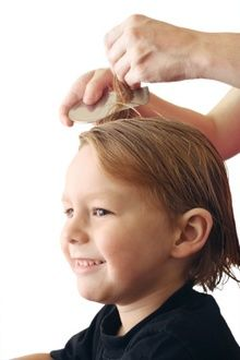 Proper tools of the trade and technique are essential to removing every nits. Otherwise,the head lice case will start up again.
