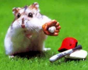 Mice-In-Sports-17