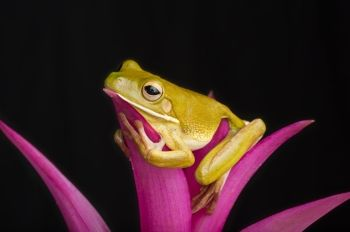 #Rainforest #lounge #frog #color #colorful #nature #beautiful