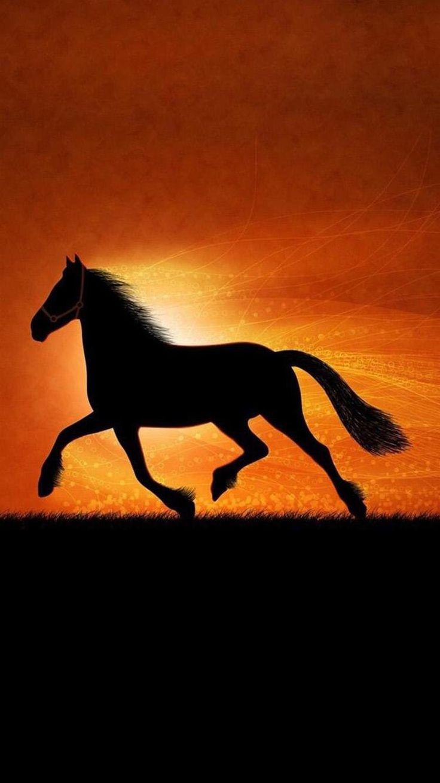 Best Wallpaper Horse Samsung Galaxy - 80331acaf9c06f9ba37622fbef8a31fd  Pic_89374.jpg
