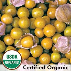 Ground Cherry, Aunt Molly's Organic   Seed Savers Exchange