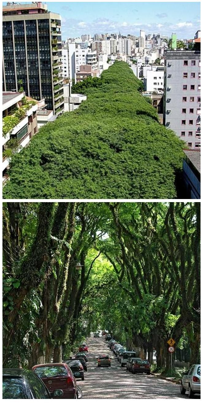 Green urban tunnel.