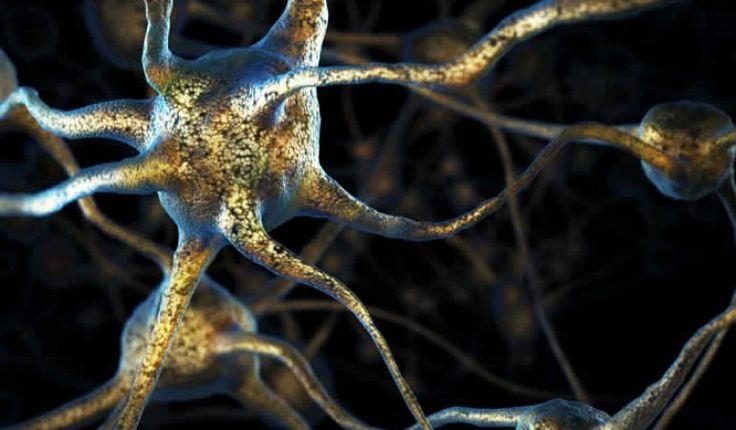 (adsbygoogle = window.adsbygoogle || []).push();   El campo de la biología es bastante diverso y a veces confuso, sin embargo, por más conocimientos que tengamos sobre ciencia hay muchas condiciones que aún son inexplicables, conozcamos algunas de ellas. 1. El efecto...