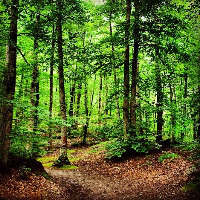 Yeşile doymak için gidilmeli :) Yedigöller / Bolu