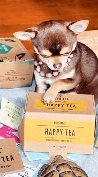 Happy Tea is a mood range tea from Your Tea. Great for the body & mind!