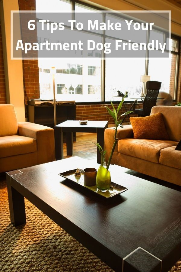 6 Tips To Make Your Apartment Dog Friendly Cool Dogs Friends Pets